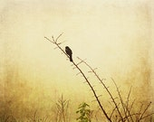Country Life Photograph bird foggy wetlands morning red wing blackbird ethereal 8x10 golden amber