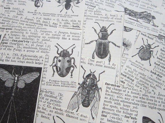 43 antique dictionary illustrations - INSECTS - collage supplies