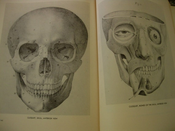Vintage Book. An Atlas of Anatomy for Artists by Fritz Schider, 189 Plates. Muscles, Bones