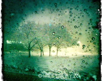 April Showers Nature Rain - 5x5 Fine Art Print