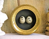 Florentine Bird Egg Shadowbox