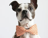 Orange and Ivory Chevron Geometric Dog Bow-tie  - Wedding Accessories for Dogs - Fall Collection