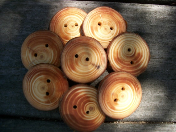 8 Large Blue Spruce Buttons. About 1.75 Inches Wide