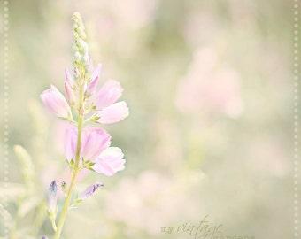 beautiful summer flowers-flower photography - flower photo- cottage garden (8 x 8 Original fine art photography prints) FREE Shipping
