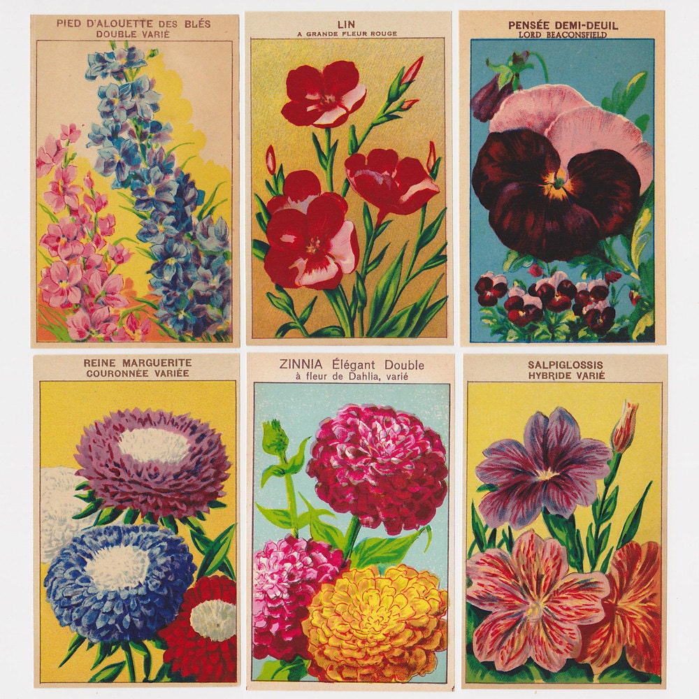 Set Of 10 Country Garden Flower Seed Wedding Favours With: 24 French Flower Seed Packet Labels Set 3