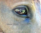 "Horse --In the Eyes of A Horse, 8"" x 10"" Photo  Print"