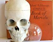 Vintage 1960s Science Anatomy Class Model. Human Skull