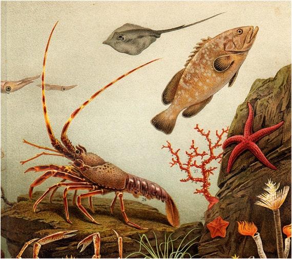 1900s Gorgeous AQUARIUM lithograph, Medusa, ray, lobster, crab, starfish, fish, squid, aquatic plants, shells. Antique fine print