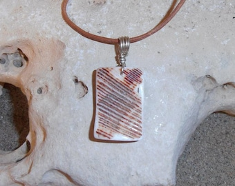 Contrast- This Shell Talisman features a piece of shaped and polished Lion's Paw Shell with a Silver wire bail