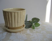 Vintage McCoy Planter Bamboo 372, Creamy Pale Yellow Pottery Flower Pot, RARE Collectible