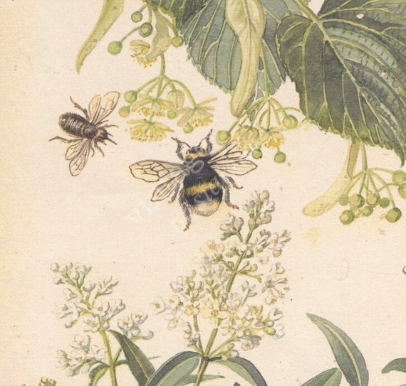 Buzzing BEES with LIME flowers - 1970s vintage book watercolor illustration - kitchen decor, ready to frame