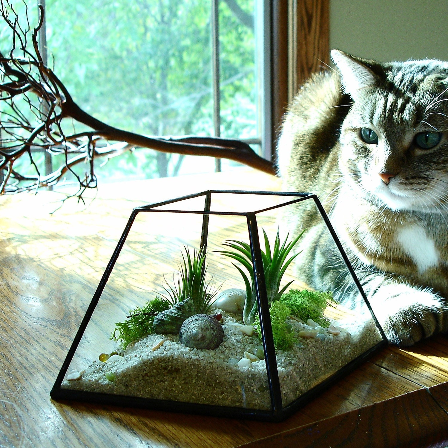 air plant terrarium glass planter diy kit. Black Bedroom Furniture Sets. Home Design Ideas