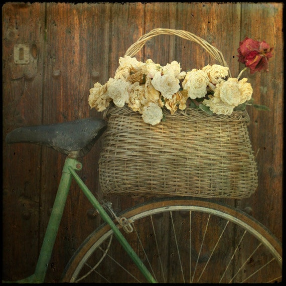 France Photography - Provence Photograph - 8x8 bicycle Photo  white red roses basket - Neutral colors Wall Decor