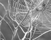 Halloween Decor, Spider Web, Black and White Photograph, Nature Photography, Spooky Decor, Nature Prints, Spiderweb Art, Spider Web Photo