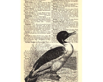 Goosander Bird Large Vintage Art Print on Antique 1896 Dictionary Book Page