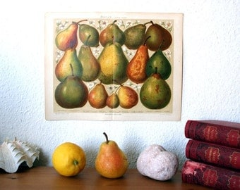 Pears Antique Original 1896 Lithograph from Vintage Dictionary OOAK One of a kind