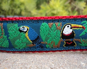 """Sale Dog Collar Parrot 1"""" width Quick Release buckle adjustable - very limited ribbon - no martingale"""