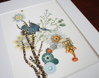 King Coral /  Archival Art Print / Blue bird flying in sea life