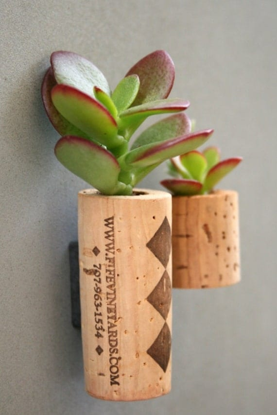 Succulent Cork Magnet, Diamonds Set of 2
