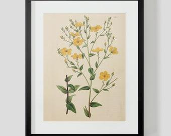 Botanical Print Plate 1326