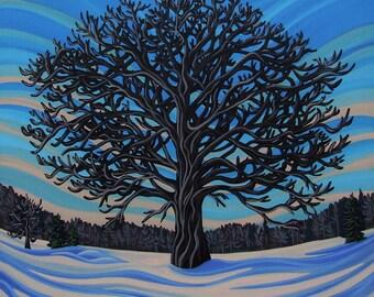 Mansfield oak
