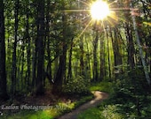 Woodland path to Chapel Falls with the morning sun filtering through the trees  color print