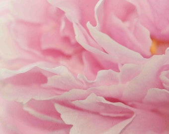 Pink Peony, vintage floral photo, botanical photo, pink petal, rose, dreamy, girls room decor, 8x8 photo