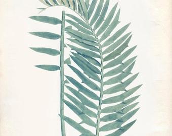 Vintage Zamia Plant Print 8x10 P239
