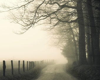 landscape photography, fog, rural, road, moody, trees, country road, Hyatt Lane 12 x 8 print