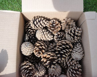 Ponderosa Pine Cones    Wreath Decor   Pine Cones  Box Of Pine Cones   Natural Ponderosa Cones