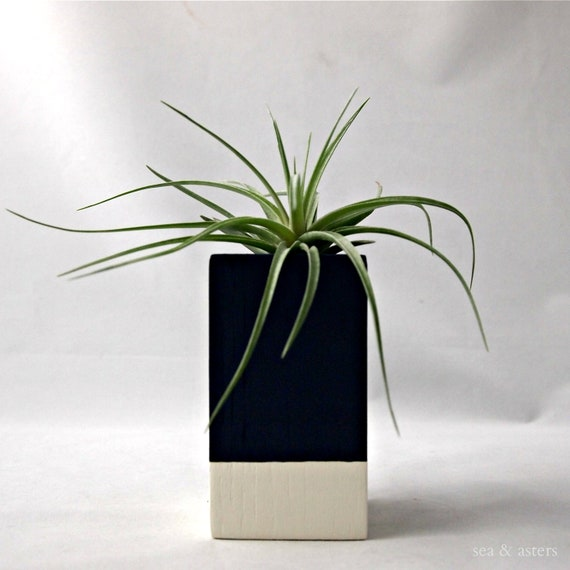 Navy // Cream Air Plant Cube - Stricta // Home Decor // Plant Vessel