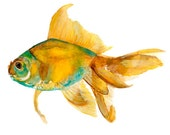 fish watercolor print orange & bluish green - skriza