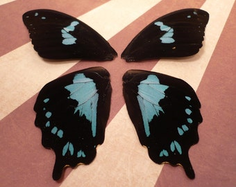 Stunning Black & Metallic Turquoise Butterfly Wings