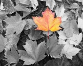 Fall/Autumn Leaves, Halloween,   Orange, Yellow, Selective Color,  Nature Photography