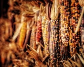Fall Decor, Autumn Decor, Halloween Decor, October, Indian Corn Photography, Thanksgiving Decor, Fall Wall Art, Orange Gold Russet Sepia.