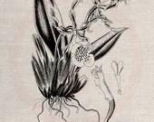 Clip Art Design Transfer Digital File Vintage Download DIY Scrapbook Shabby Chic Pillow Burlap Flower Garden Botanical Sheet Art No. 0478
