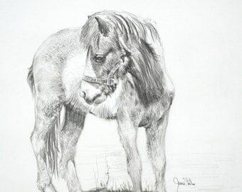Horse Art, An Original Graphite Drawing