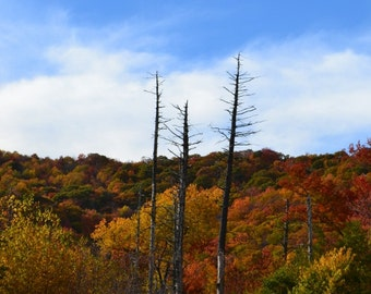 Silent Sentinels - Photograph - Fall Mountain Photo