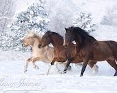 Three Snow Horses - Fine Art Horse Photography - Horse - Snow