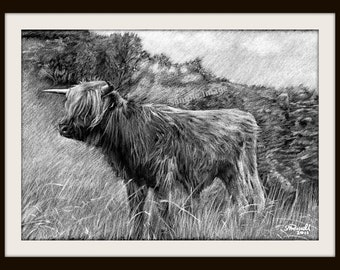 Highlander 2 (B&W) - Cow Cattle A4 A3 or A2 Size Limited Edition Print from RussellArt