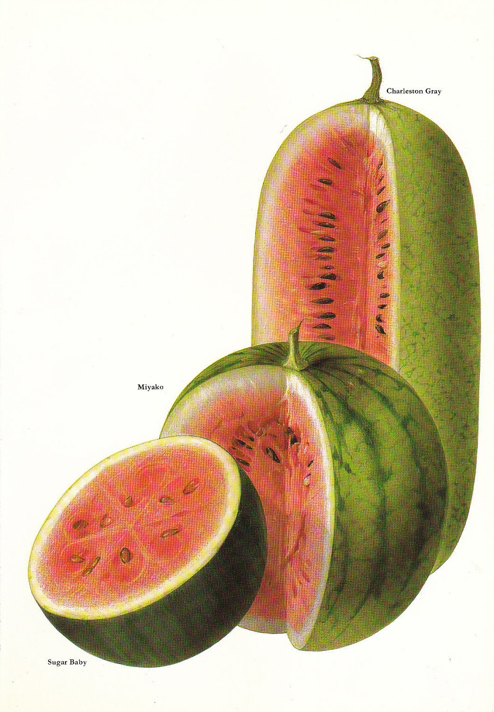 Vintage Watermelon 44