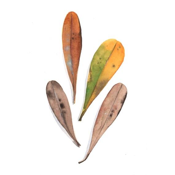Banksia Leaves Painting - nature natural Original watercolor painting