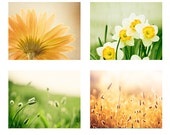 Colorful Photo Set, Four Photographs, yellow green gold 4 print set nature nursery 11x14, 8x10 botanical wall art picture white photography