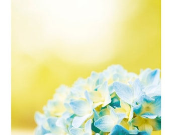 "Yellow Photography, blue hydrangea aqua wall print vertical nature spring photo floral picture colorful botanical photograph, ""Hydrangea"""