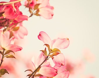 "Flower Photography - dogwood pink spring wall art floral photo coral salmon nature cream blossom fine art print - 8x10 Photograph, ""Dogwood"""