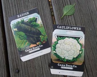 Vintage Seed Packs, Cauliflower and black radish, free shipping