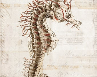 Antique Seahorse Art Collage Print - 5 x 7 - Natural History - Seahorse Collage Home Decor