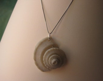 Gray Seashell Spire Pendant