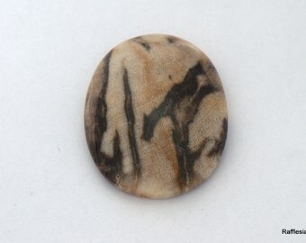 fossil petrified wood big size cabochon