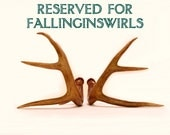 Reserved - Real Deer Antlers - Ready to Mount